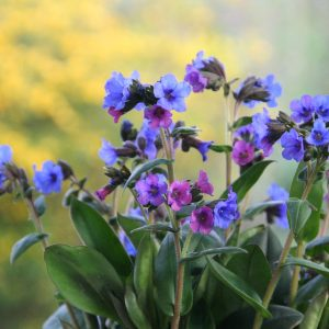 Ten of the Best Plants for Shady Spots